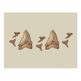 Fossil Shark Teeth Postcard