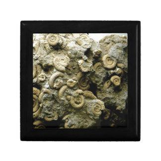 fossil shells art gift box