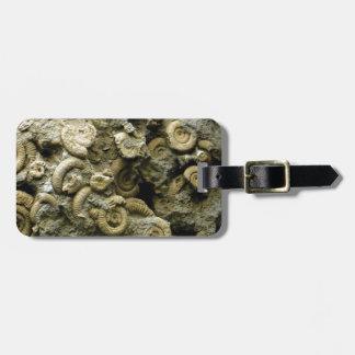 fossil shells art luggage tag