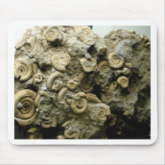 fossil shells art mouse pad