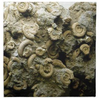 fossil shells art napkin
