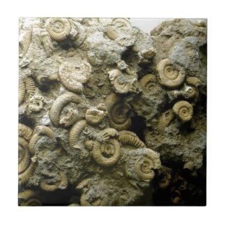 fossil shells art tile