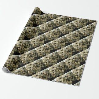 fossil shells art wrapping paper