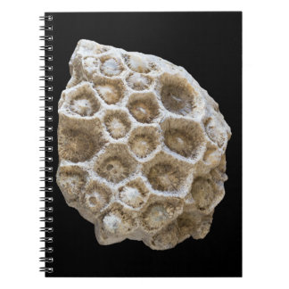 Fossilized Coral Closeup Photo Notebook