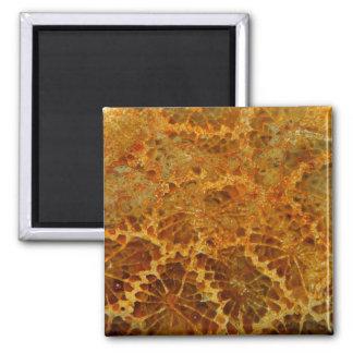 Fossilized coral natural jasper gemstone magnet