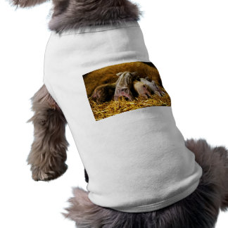 Four Baby Piglet Mangalitsa Hogs Showing Butts Sleeveless Dog Shirt