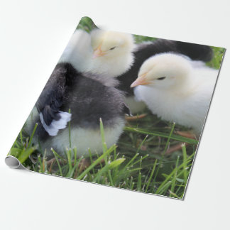 Four Black and Yellow Baby Chicken chicks Wrapping Paper