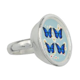 Four blue butterflies