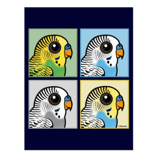 Four Color Budgies Postcard