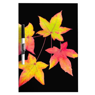 Four colored autumn leaves on black background dry erase board