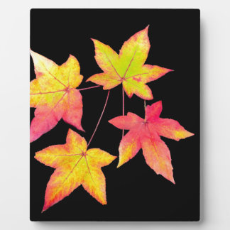 Four colored autumn leaves on black background plaque