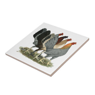 Four Gamefowl Hens Ceramic Tile
