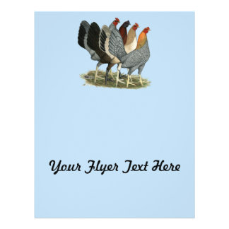 Four Gamefowl Hens Flyer