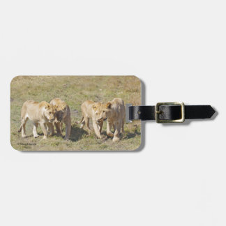 Four Lionesses Luggage Tag