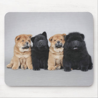 Four little Chow chow puppies Mouse Pad