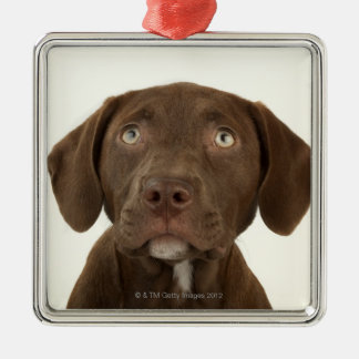 Four-Month-Old Chocolate Lab Puppy Portrait Metal Ornament