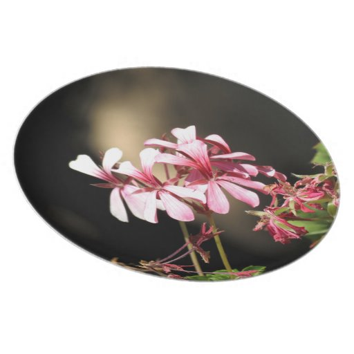 Four Pink Flowers Party Plate