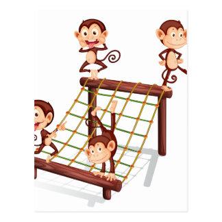 Four playful monkeys postcard