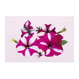 Four Red And White Petunias Acrylic Print