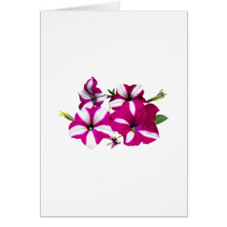 Four Red and White Petunias Card