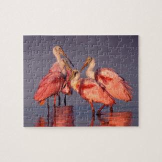 Four Roseate Spoonbills (Ajaia ajaja) at Dawn Jigsaw Puzzle