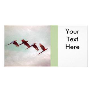 Four Scarlet Mackaws Flying Photo Card Template