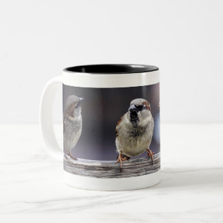 Four Sparrows on a Fence Two-Tone Coffee Mug