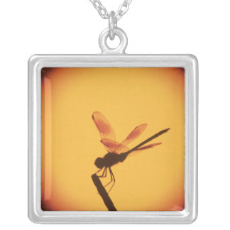 Four-spotted Pennant, Brachymesia gravida, Square Pendant Necklace