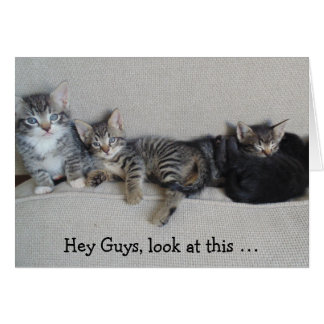 Four sweet Kittens to wish a happy Birthday! Greeting Card