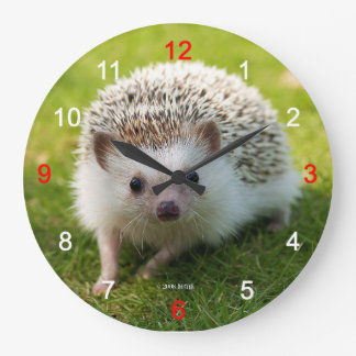 Four-toed hedgehog large clock