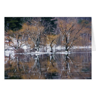 Four Trees Reflected Card