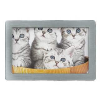 Four young cats sitting in wooden bowl on white belt buckles