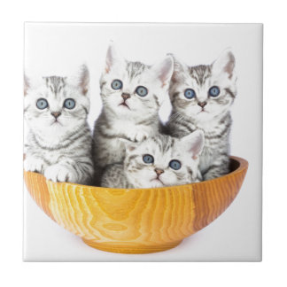 Four young cats sitting in wooden bowl on white ceramic tile