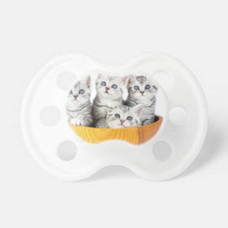 Four young cats sitting in wooden bowl on white dummy