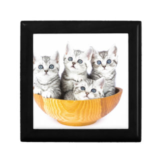 Four young cats sitting in wooden bowl on white gift box