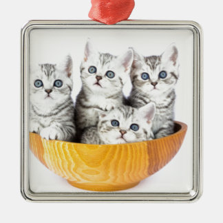 Four young cats sitting in wooden bowl on white metal ornament