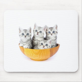 Four young cats sitting in wooden bowl on white mouse pad