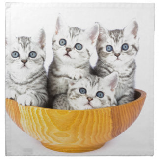 Four young cats sitting in wooden bowl on white napkin