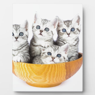 Four young cats sitting in wooden bowl on white plaque