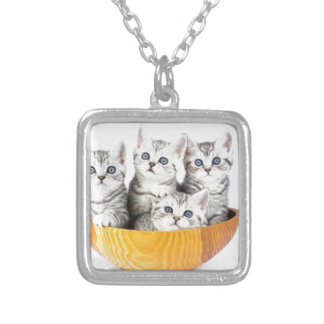Four young cats sitting in wooden bowl on white silver plated necklace