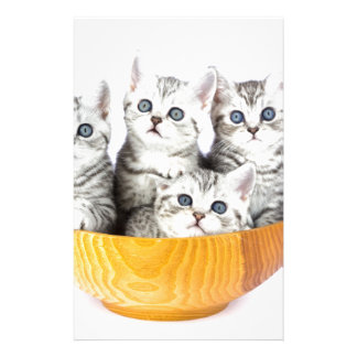 Four young cats sitting in wooden bowl on white stationery