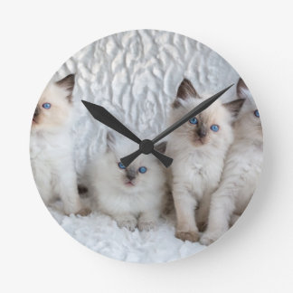 Four young Ragdoll cats sitting in a row Round Clock