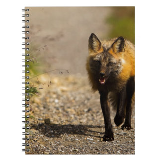 Fox Animal Office Shower Party Art Spiral Note Books