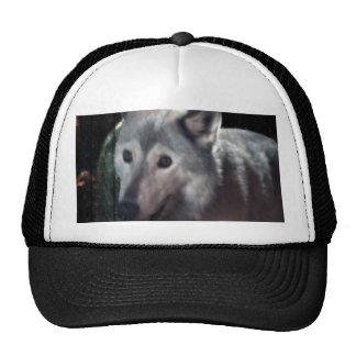 FOX at night dangerous animal cunning wild creatur Trucker Hat