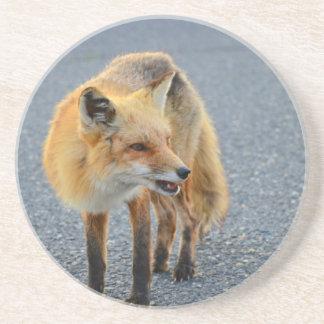 Fox Barking Beverage Coasters