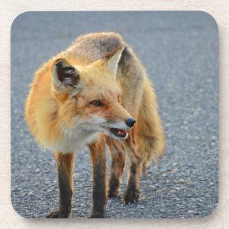 Fox Barking Drink Coasters