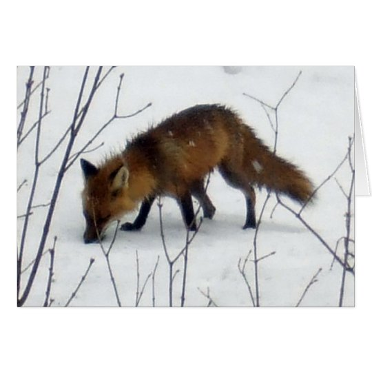 Fox-Blank Card