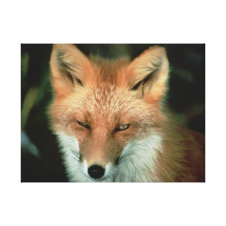 FOX STRETCHED CANVAS PRINT
