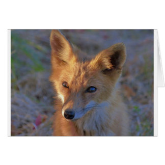 fox card