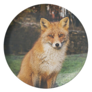 Fox Collection Plate